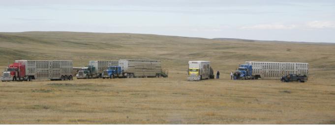 trucks in a field